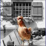 Apa Tanda Semangat Ngeblog Kamu Cuma Hangat-hangat Tahi Ayam?